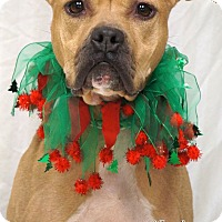 Adopt A Pet :: Faye - Newnan City, GA
