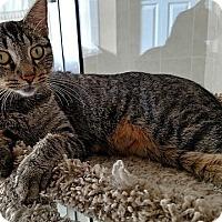 Adopt A Pet :: Charlotte - Tampa, FL