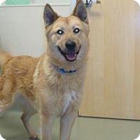 Adopt A Pet :: Obie - Wildomar, CA