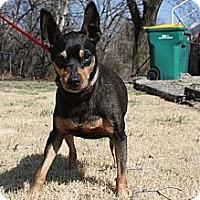 Adopt A Pet :: Danny - Topeka, KS