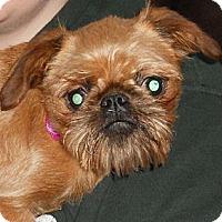 Adopt A Pet :: Poppi - batlett, IL