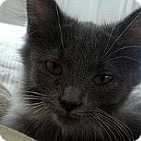 Adopt A Pet :: Cinder - Byron Center, MI