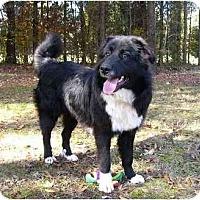 Adopt A Pet :: Houston - Mocksville, NC