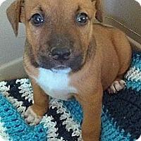 Adopt A Pet :: Athina - Austin, AR