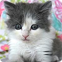 Adopt A Pet :: Ramona - St. Louis, MO