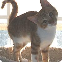 Adopt A Pet :: Dennie - Colmar, PA