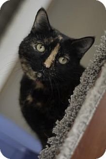 Cats For Adoption In Oak Park Il