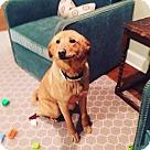 Adopt A Pet :: Sparkle