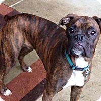 Adopt A Pet :: Sam - Woodinville, WA