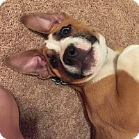 Adopt A Pet :: Thelma - Alpharetta, GA