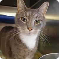 Adopt A Pet :: Bubble - Bellevue, WA