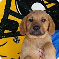 Adopt A Pet :: Hefty - Oviedo, FL