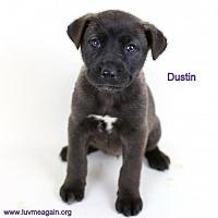 Adopt A Pet :: Dustin - Needs Foster - Bloomington, MN