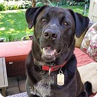 Adopt A Pet :: Rocco - Sagaponack, NY