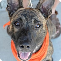 Adopt A Pet :: Pebbles - Sunnyvale, CA