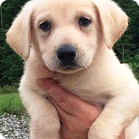 Adopt A Pet :: I'M ADOPTED Budderball Heffern - Oswego, IL