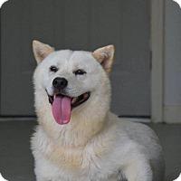 Adopt A Pet :: Paul - Charlemont, MA