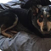 Adopt A Pet :: Talon - Texico, IL