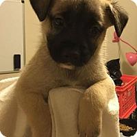 Adopt A Pet :: Muenster - Brookeville, MD