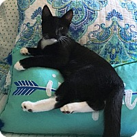 Adopt A Pet :: Felix - Orange, CA