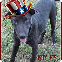 Adopt A Pet :: Riley-Really Gentle Dog - Marlborough, MA