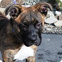 Adopt A Pet :: Fargo - Portola, CA