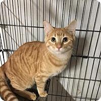 Adopt A Pet :: Riley 1454 - Alva, OK