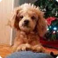 Adopt A Pet :: Pinky (5 yr 12 lb) - Kermit, WV