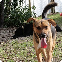 Adopt A Pet :: Joy - Weeki Wachee, FL