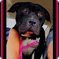 Adopt A Pet :: Layla - Rancho Cucamonga, CA