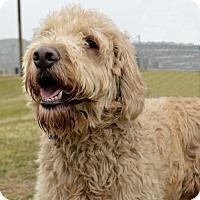 Adopt A Pet :: Leo  34412107 - Westampton, NJ