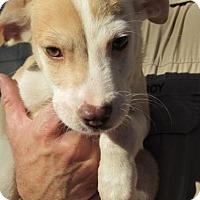 Adopt A Pet :: Amos - Rocky Mount, NC