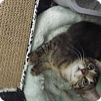 Adopt A Pet :: Quirky - Dallas, TX
