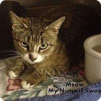 Adopt A Pet :: Sway - Trevose, PA