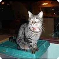 Adopt A Pet :: Ace - Hamburg, NY