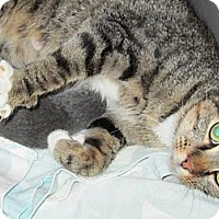 Adopt A Pet :: Frannie - Jeffersonville, IN