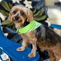 Adopt A Pet :: Chewy - Los Angeles, CA