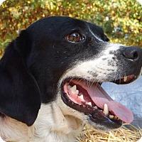 Adopt A Pet :: Davy - Pocahontas, AR