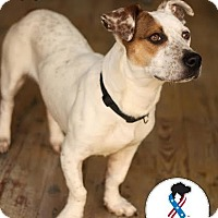 Adopt A Pet :: Mack - Jackson, TN