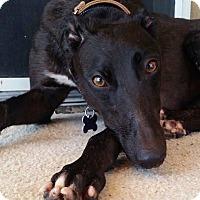 Adopt A Pet :: Sunni - Tucson, AZ