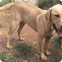 Adopt A Pet :: Otis - Adoption pending - East Hartford, CT