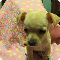Adopt A Pet :: Maya - Lodi, CA