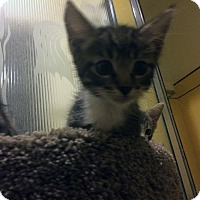 Adopt A Pet :: Billy - Mission Viejo, CA