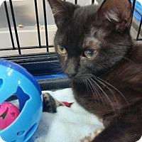Adopt A Pet :: Hershey - Harrisburg, NC