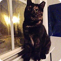 Adopt A Pet :: Wednesday - Colmar, PA