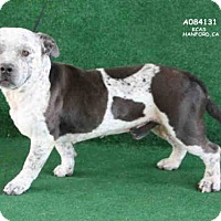 Adopt A Pet :: A084131 - Hanford, CA