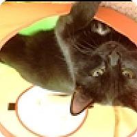 Adopt A Pet :: Vela - Vancouver, BC