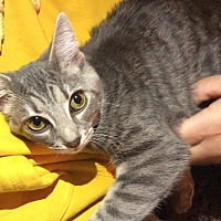 Adopt A Pet :: Fuzzy Girl - Albemarle, NC
