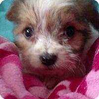 Adopt A Pet :: PEPPER - Rancho Cucamonga, CA