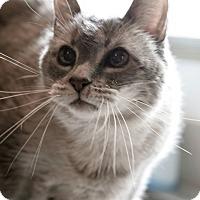 Adopt A Pet :: Rose - Carencro, LA